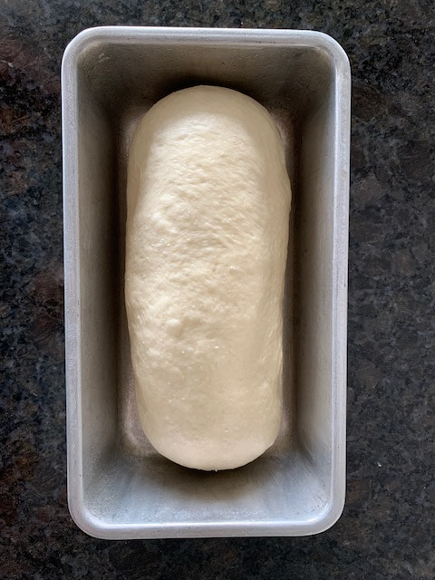Bread dough in a loaf pan, ready to rise.